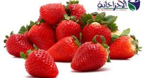 ماهى فوائد الفراولة الصحية للجسم